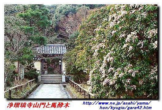080426_jyoruriji_asebi