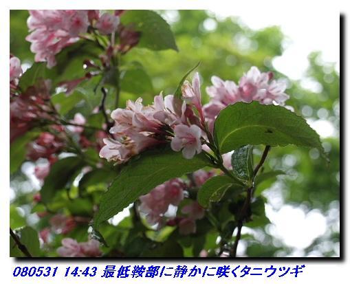 080531_0601_sanjyodake_akasakaya_10