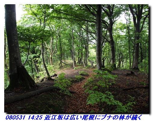 080531_0601_sanjyodake_akasakayam_9