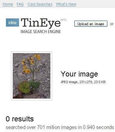 080821_tineye