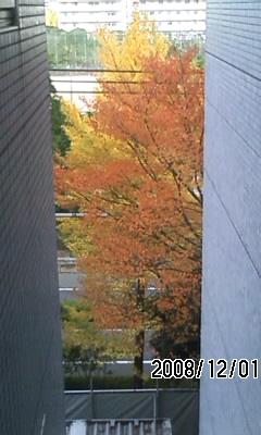 081201 紅葉と黄葉