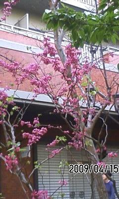 090416 季節は初夏へ