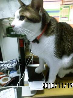101119 オジャマ猫