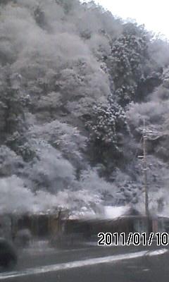 110110-2 高雄は雪もみじ