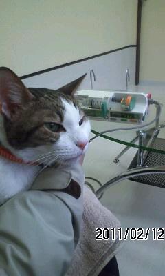 110212 ナッコ君入院中