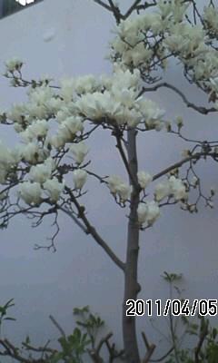 110406-2 花の春