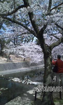130401 夙川から北山公園