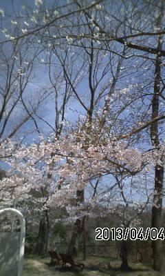 130404 渦森台の桜