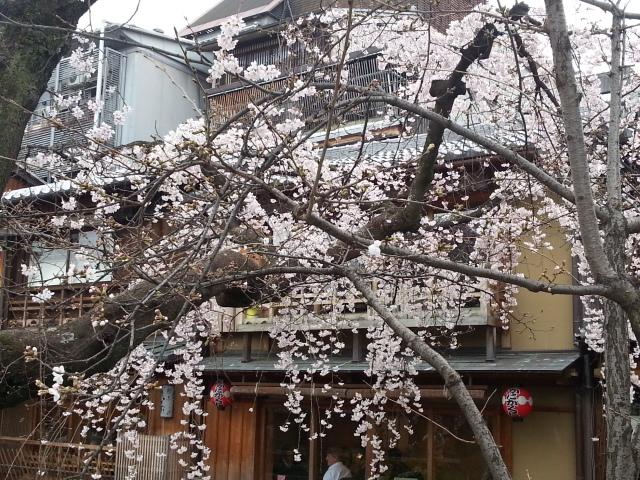140328 京都の花見