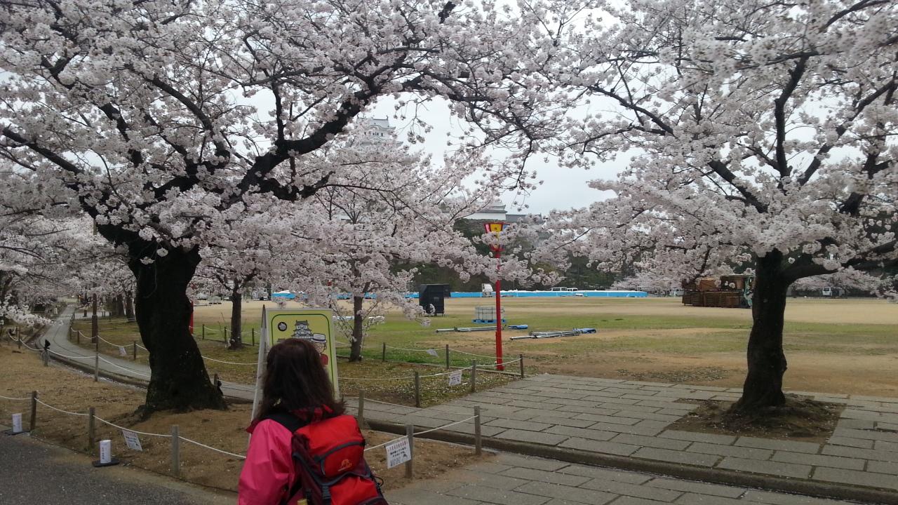 150403 姫路城