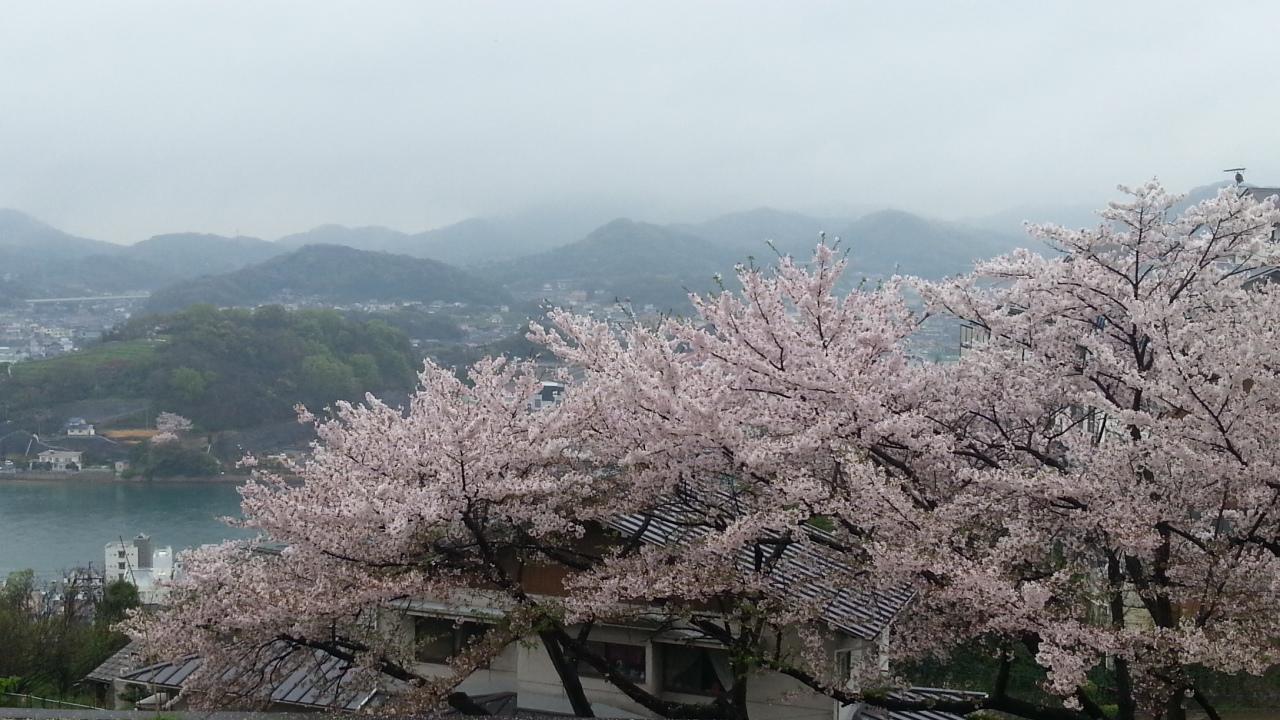 150406 尾道の桜