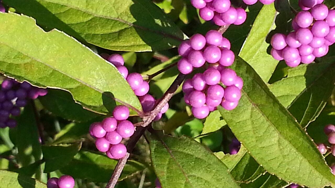 150929 小紫と絹雲