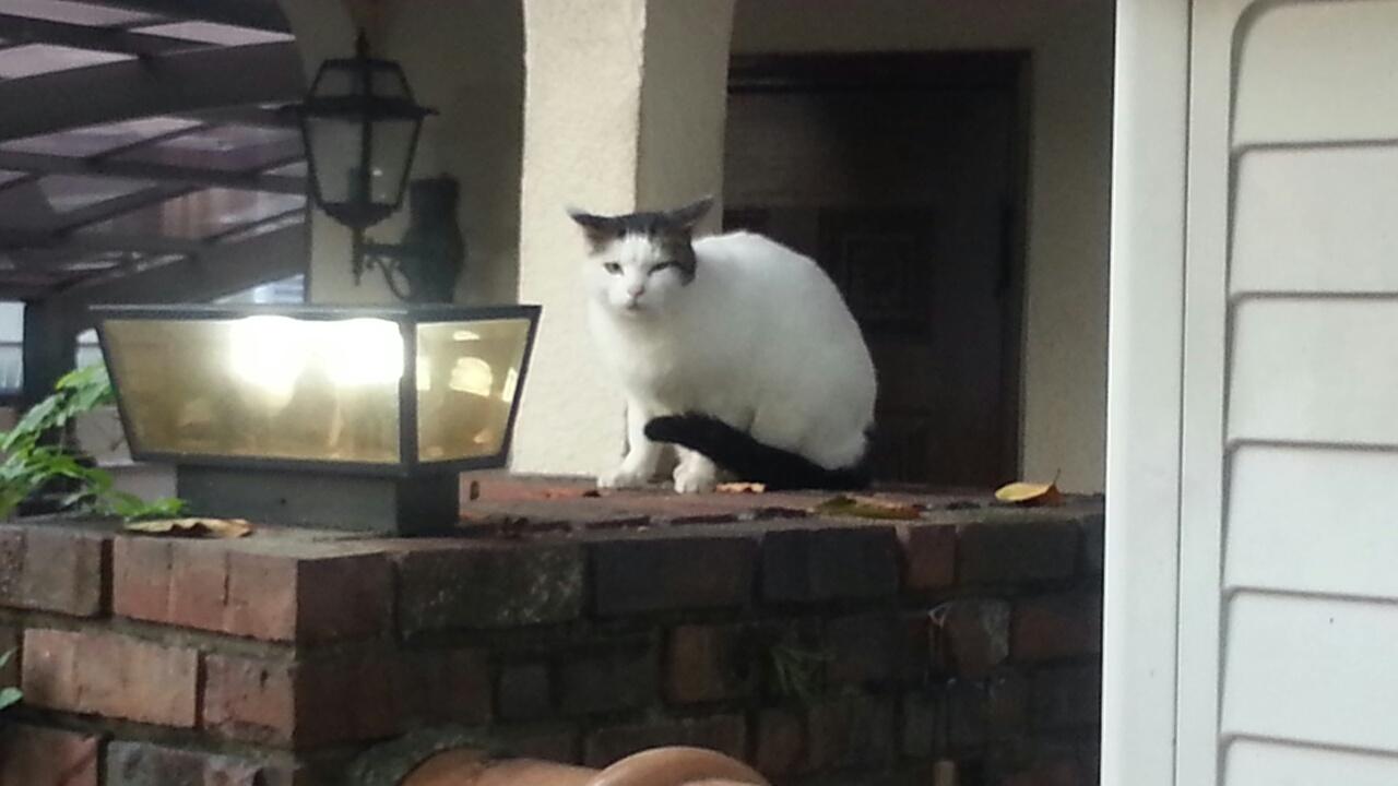 151101 幸せ猫