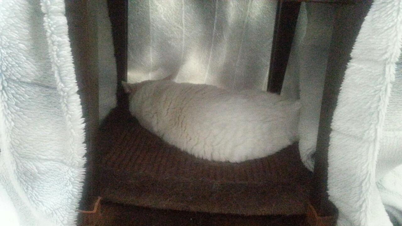 151228 ミルクちゃんの床暖こたつ