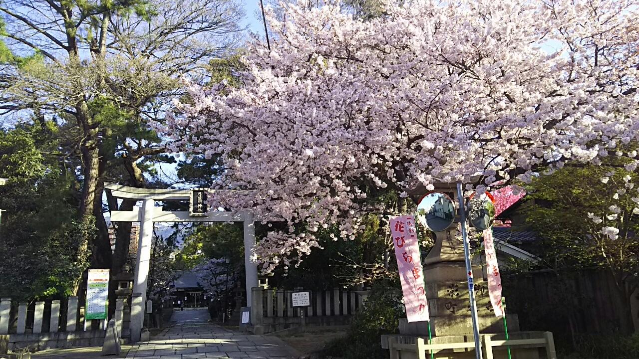 160402 桜が満開
