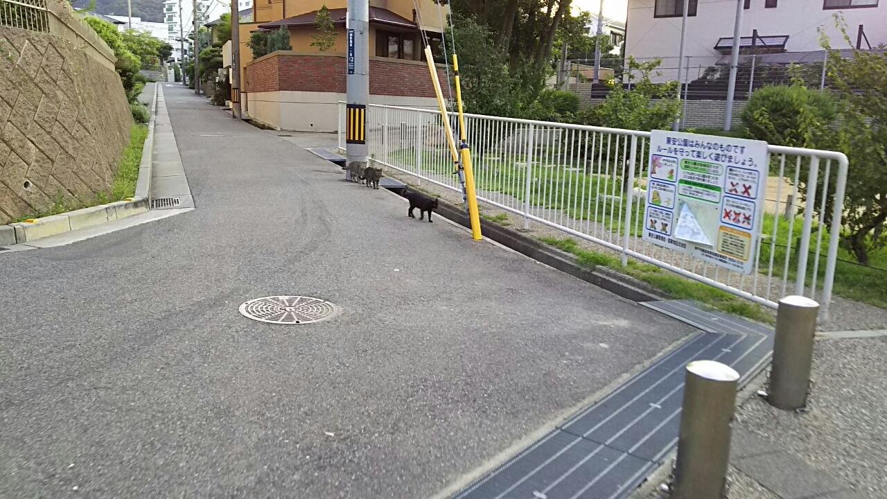 160730 猫ちゃんの散歩道