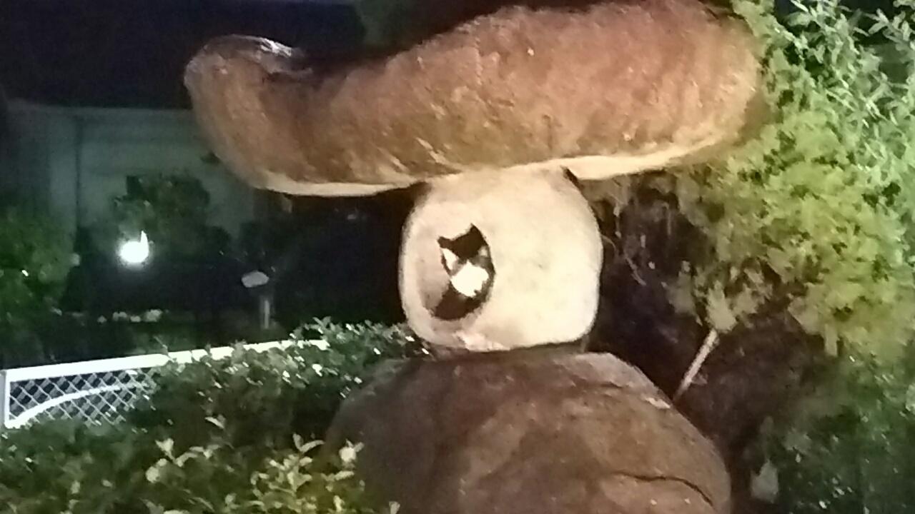 160923 夜明けの猫ちゃん