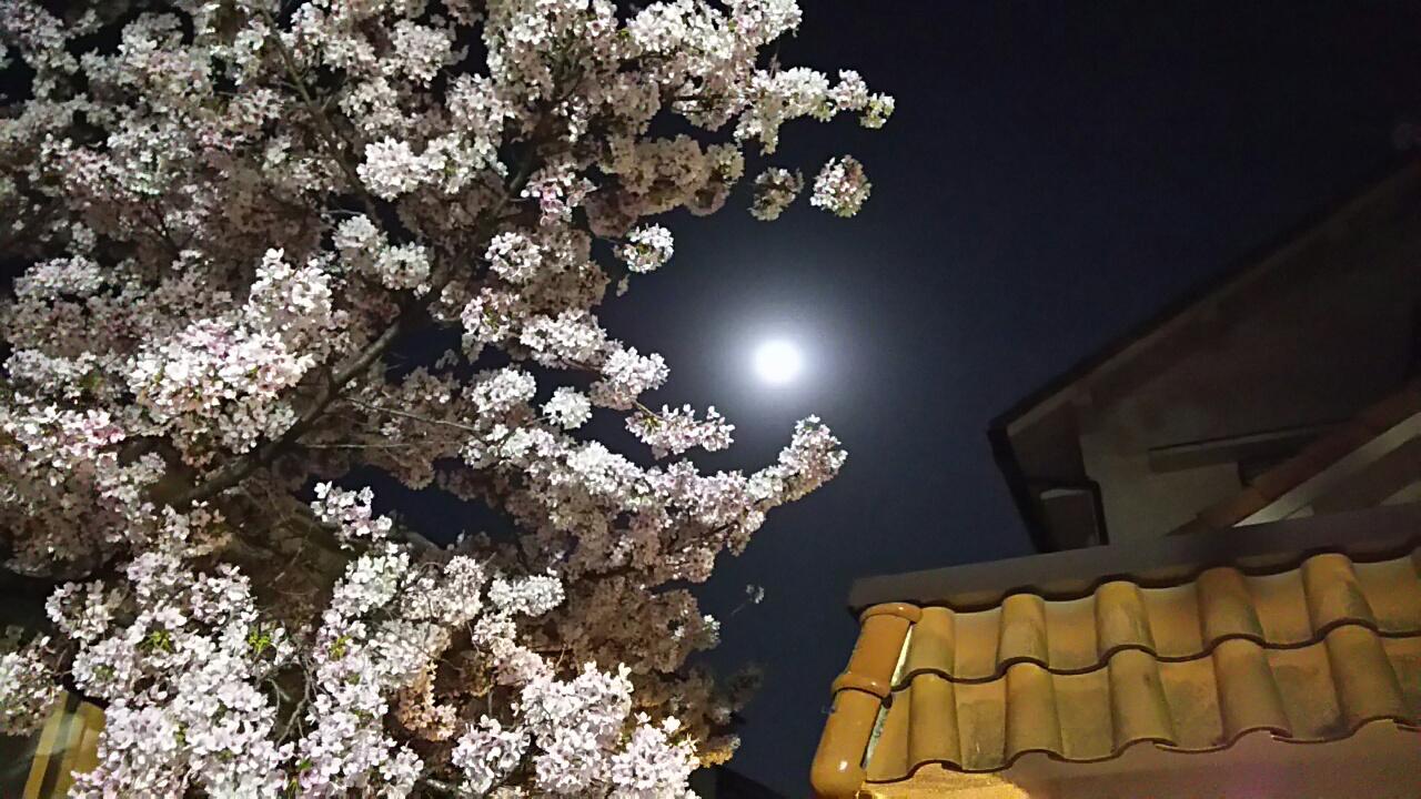 170413 満月の花見