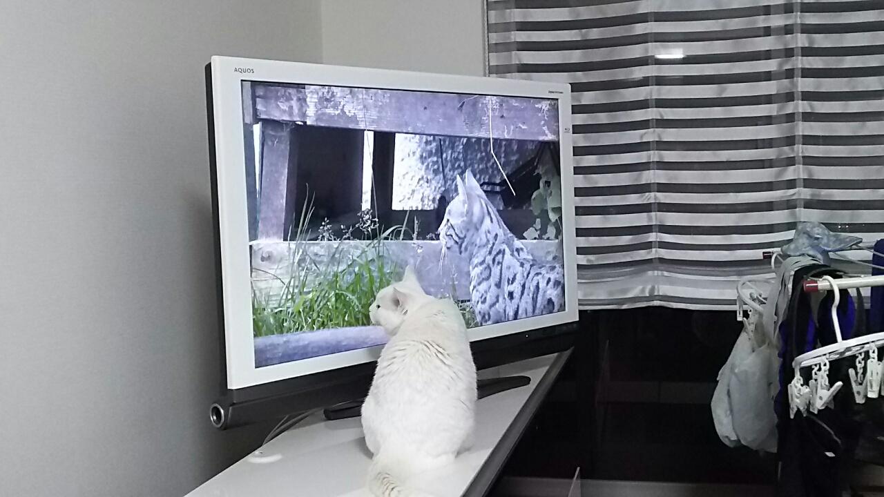 170424 ミルクちゃんとテレビ