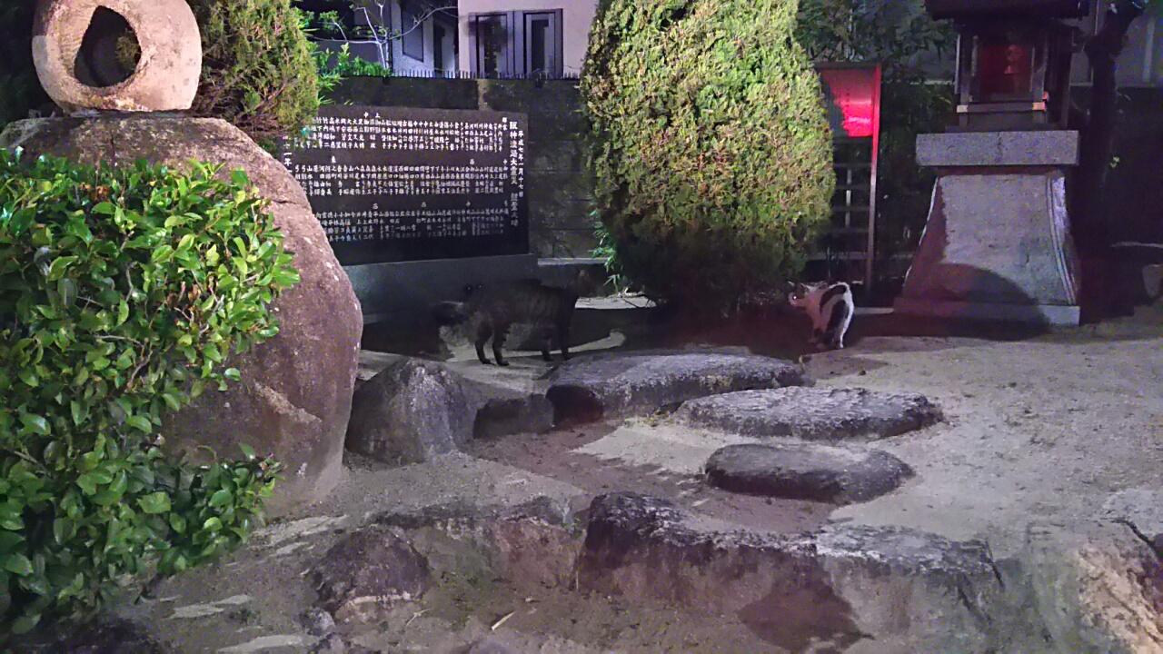 170607 梅雨入りと猫
