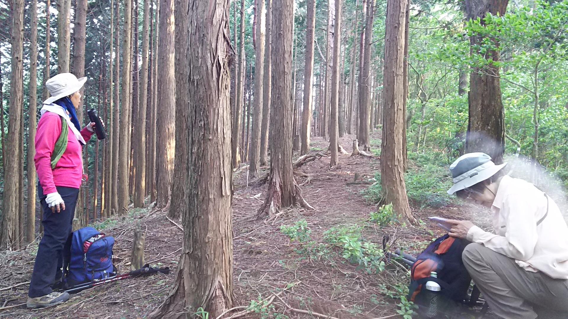 170610 小野谷峠から大見尾根、扶桑尾根の下見完了