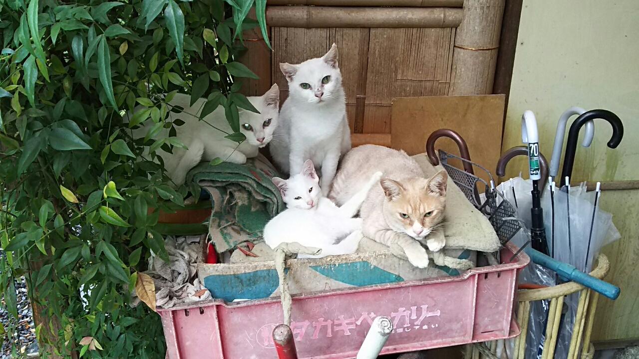 170807 猫ちゃん オハヨウ!