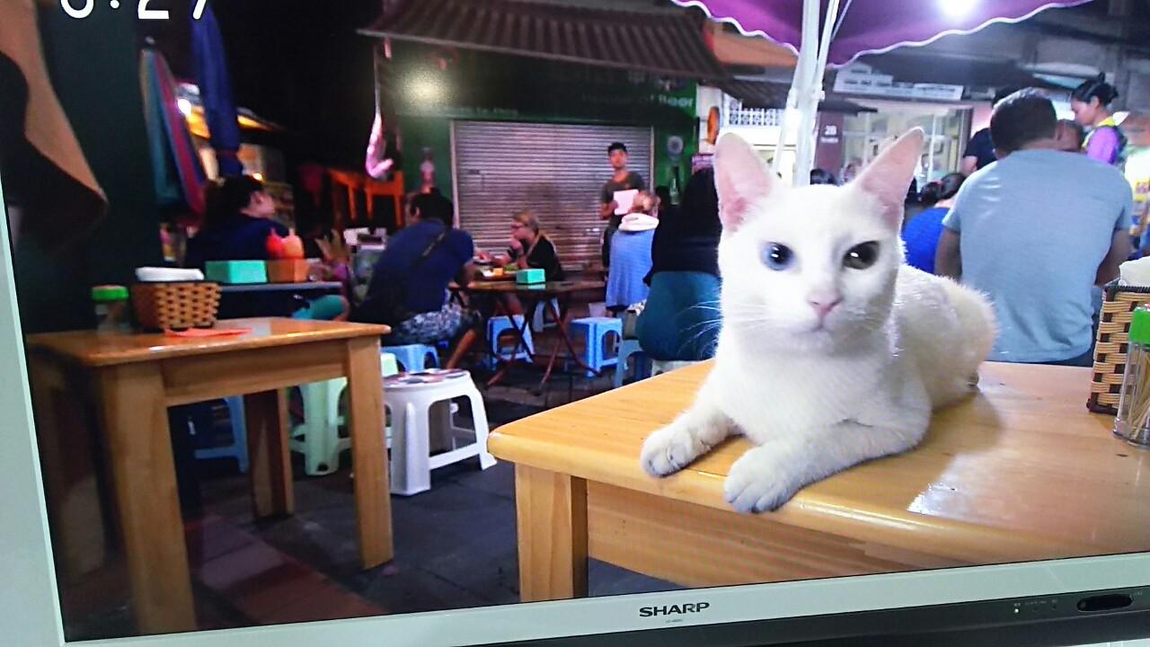 180221 ミルクちゃんとテレビの猫ちゃん