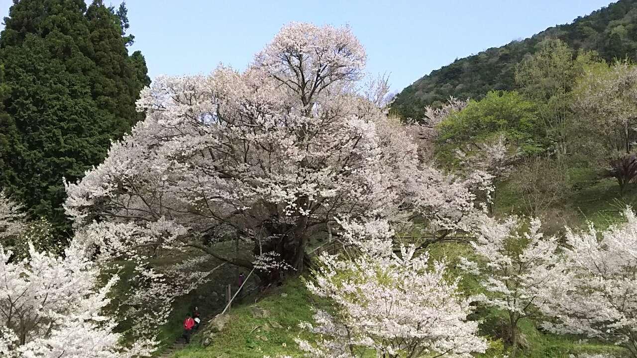180408 仏隆寺から三郎ガ岳の例会完了
