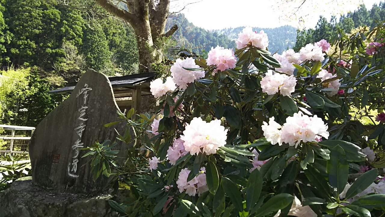 180421 三本杉の探訪、無事完了