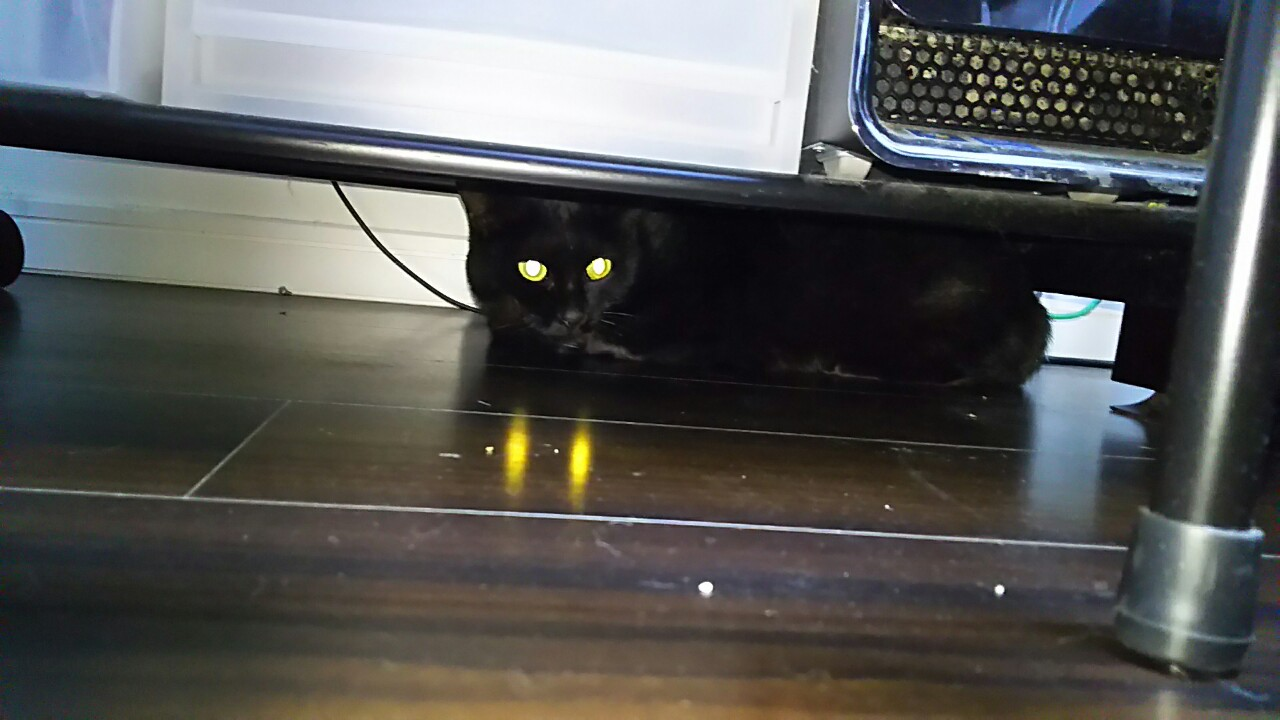 181205 黒猫ちゃん無事退院