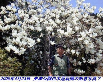 000423_Shisekikouen_HakuMokuren_01