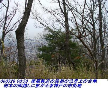 060326_mayayabumiti_shisekikoen_yagin_00423_shisekikouen_hakumokuren_03