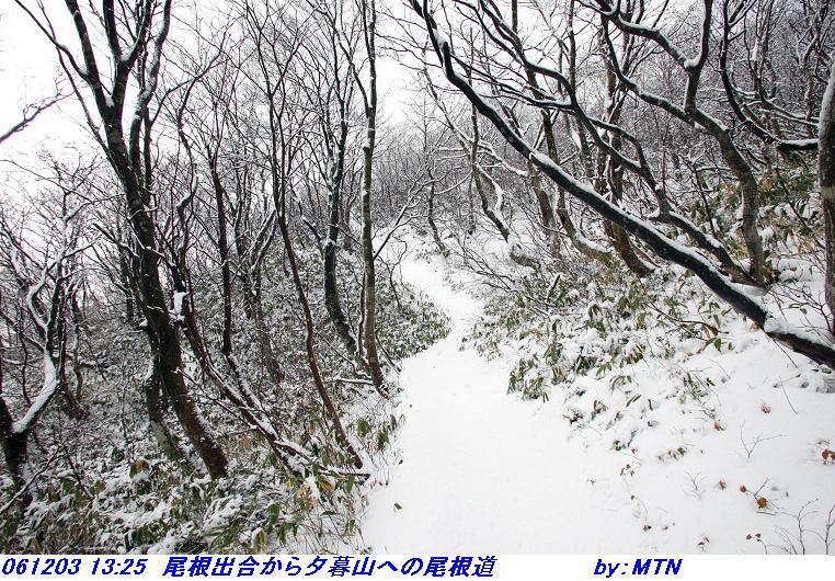 061203_1325_onedeaikara_yugureyamaheno_o