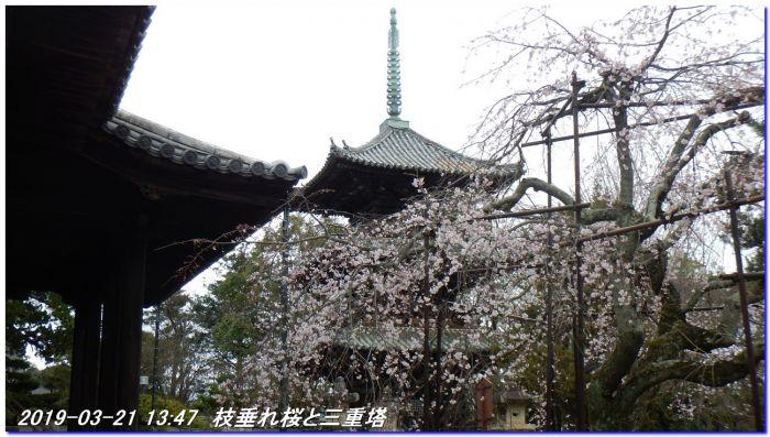 190321_kiiutihara_dojyoji_gobo_030