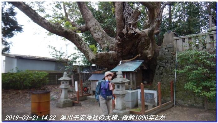 190321_kiiutihara_dojyoji_gobo_039
