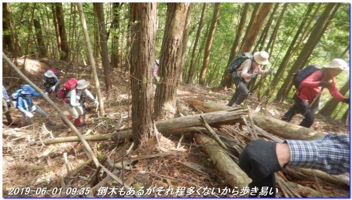 190601_akaoyama_bisyamonyama_008