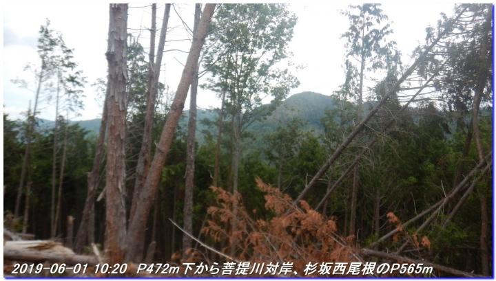 190601_akaoyama_bisyamonyama_014
