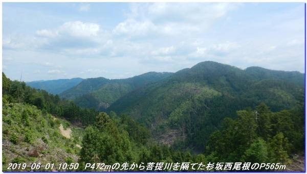 190601_akaoyama_bisyamonyama_019