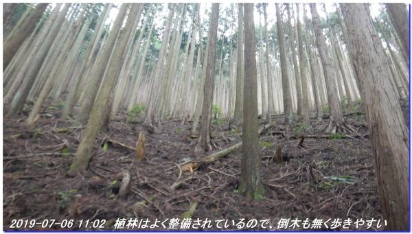 190706_hangokutakayama_kuguitoge_017