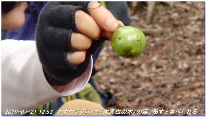 190721_hangokutakayama_kuguitoge_032