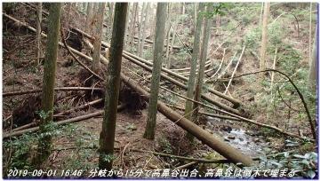 190901_akaoyama_sawanoike_047