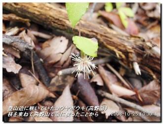 081025kisurashiyama_05