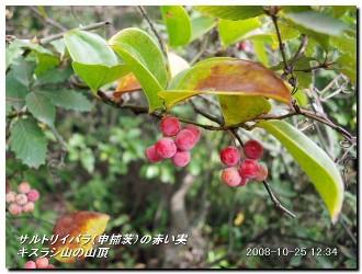 081025kisurashiyama_14
