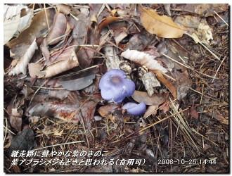 081025kisurashiyama_17