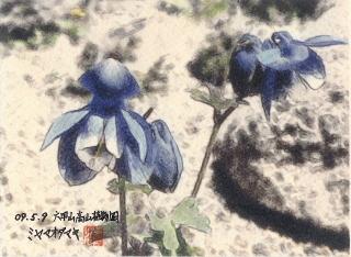 090509_odamaki_002