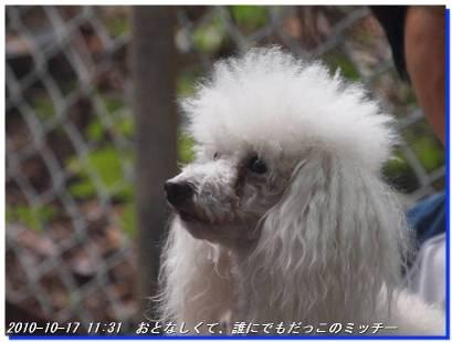101017_dauntridge_yugebokujyo_20