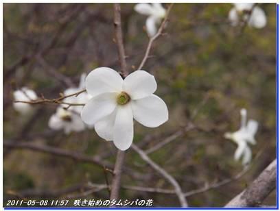 110508_hakodateyama_syojyoko_2