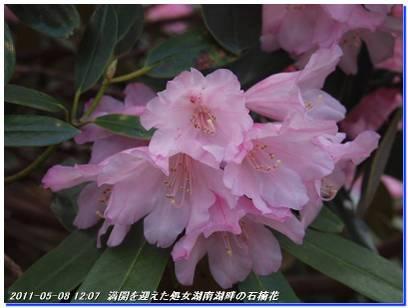 110508_hakodateyama_syojyoko_3