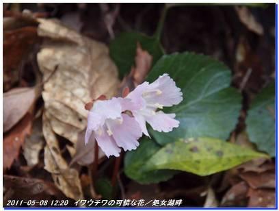 110508_hakodateyama_syojyoko_5