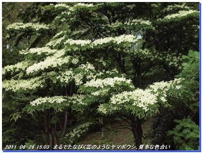 110626_rokkokinenhidai_kozansyokubu